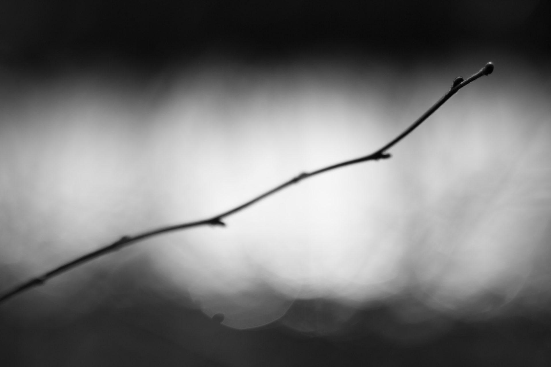 Fotografin - Daniela Hürlimann - SW Zweig im Licht